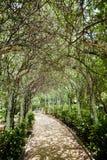 zielony tunelu Obraz Royalty Free