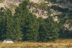 Zielony turystyczny namiot w sosnowym lesie fotografia royalty free