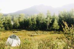 Zielony turystyczny namiot w sosnowym lesie w halnej dolinie fotografia stock