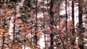 Zielony turystyki t?o Drzewni baga?niki, rozga??ziaj? si? i opuszczaj? na zmierzchu tle wspania?e lato dni Zmierzch w lesie zbiory