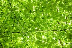 Zielony ulistnienie zdjęcie royalty free