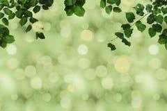 zielony ulistnienie i bokeh Zdjęcie Stock