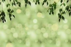 zielony ulistnienie i bokeh Obrazy Royalty Free