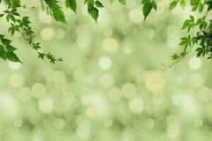 zielony ulistnienie i bokeh Obrazy Stock