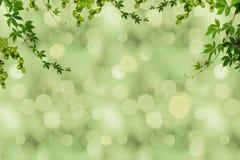 zielony ulistnienie i rozmyty tło Zdjęcie Royalty Free