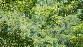 Zielony ulistnienie poruszający na wiatrze naturalne abstrakcyjne tło zdjęcie wideo