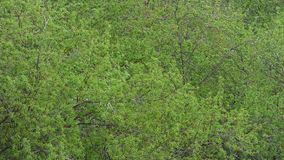 Zielony ulistnienie poruszający na wiatrze naturalne abstrakcyjne tło zbiory wideo