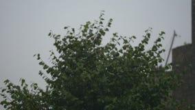 Zielony ulistnienie w deszczu Lato deszcz mokre liście zdjęcie wideo