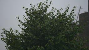 Zielony ulistnienie w deszczu Lato deszcz mokre liście zbiory wideo
