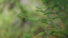 Zielony ulistnienie w lesie zbiory