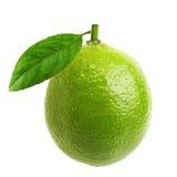 Zielony wapno z liściem fotografia stock