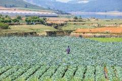 Zielony warzywa pole blisko Lang Biang góry, Da Lat miasta, zwiania Dong prowincja, Wietnam Fotografia Royalty Free