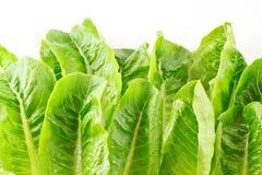 Zielony warzywa tło Zdjęcia Royalty Free