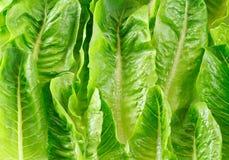 Zielony warzywa tło Fotografia Stock
