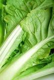 Zielony warzywa zielony zakończenie Zdjęcie Royalty Free