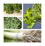 Zielony warzywo Fotografia Stock