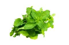 Zielony warzywo odizolowywający Obrazy Royalty Free