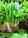 Zielony warzywo, Tom Yum, Tajlandzki jedzenie obrazy royalty free