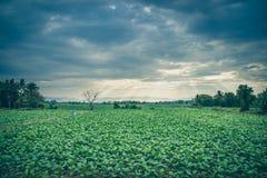 Zielony warzywo z światłem słonecznym Obrazy Stock