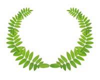 zielony wianek obrazy stock