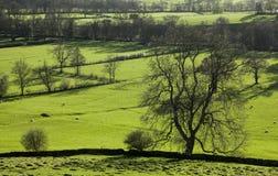 Zielony widok - łąki i drzewa, Szczytowy okręg, Anglia UK obrazy stock