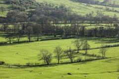 Zielony widok - łąki i drzewa, Szczytowy okręg UK obrazy stock