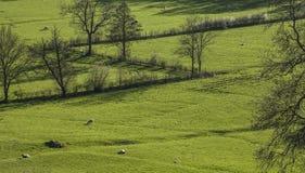 Zielony widok - łąki, Szczytowy okręg, Anglia UK obraz royalty free