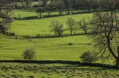 Zielony widok doliny, łąki i drzewa -, Szczytowy okręg, Anglia UK fotografia stock