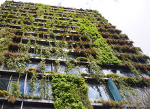Zielony wieżowiec w Sydney Australia zakrywający w ulistnieniu Fotografia Stock