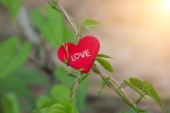 Zielony winograd z sercem na valentines dniu Obrazy Royalty Free