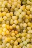 Zielony winogrona tło zdjęcia stock