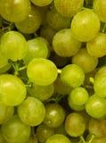 Zielony winogrono Zdjęcie Stock