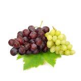 Zielony winogrono i Czerwony winogrono odizolowywający na białym tle (owoc) Obrazy Royalty Free