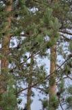 Zielony wiosna las w słońce promieniach Zdjęcie Stock