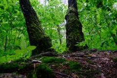 Zielony wiosna las w słońce promieniach Fotografia Stock