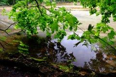 Zielony wiosna las w słońce promieniach Zdjęcie Royalty Free