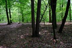 Zielony wiosna las w słońce promieniach Obrazy Stock
