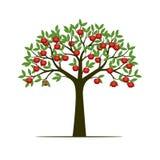Zielony wiosny drzewo z liśćmi i czerwonymi jabłczanymi owoc Wektorowy illus Fotografia Stock