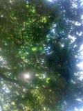 zielony wizje Obrazy Stock