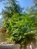 zielony wizje Zdjęcia Stock