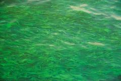 Zielony Wodny skutek z słońca odbiciem w pływackim basenie Zdjęcia Royalty Free