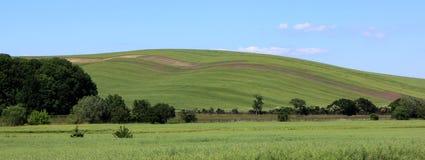 Zielony wzgórze z drzewami Obrazy Royalty Free