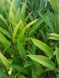 zielony życia Zdjęcie Stock