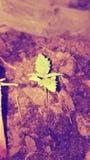 zielony życia Obrazy Royalty Free