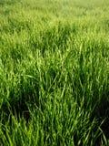 zielony życie Zdjęcia Stock
