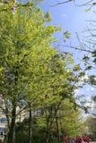 Zielony żywy teren Obrazy Stock