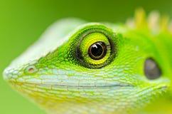 zielony zamknięta zielona jaszczurka Zdjęcia Royalty Free