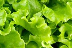 zielony zamknięta zielona sałatka Zdjęcie Stock