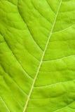 zielony zamknięty zielony liść Zdjęcie Royalty Free