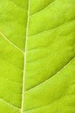 zielony zamknięty zielony liść Zdjęcia Royalty Free
